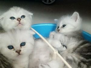 刚出生的可爱猫宝