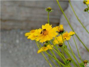 求助此花的花名,图片为实物拍摄,仅供参考