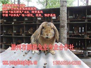 公羊兔�r格