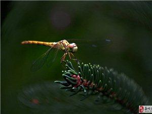秋�r拍蜻蜓