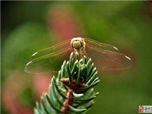 秋时拍蜻蜓