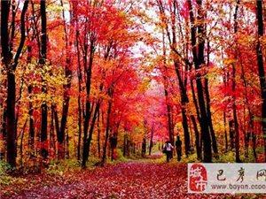 【巴彦网】二八歌户外营:10月5-6号拉法山、蛟河红叶谷两日品质行