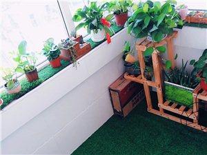 常�花卉在居室中的作用