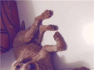 �ふ易�G的狗狗