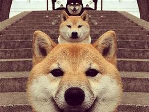 横竖都是癞皮狗的狗狗趣图