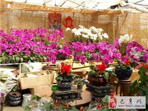 【巴彦网】二八歌户外营:9月25周日哈尔滨中国亭园+花卉大市场一日行