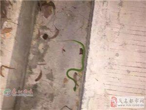 高州笔架山再次发现毒蛇,大家要小心