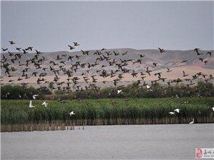 湿地现状对比