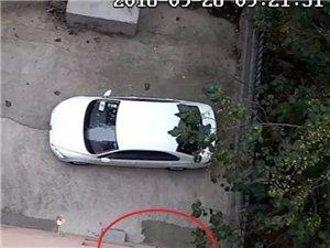 秒速飞艇:某小区业主楼上扔垃圾,砸中楼下汽车,被监控拍下
