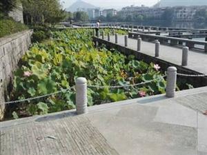 荷花池安装防护栏