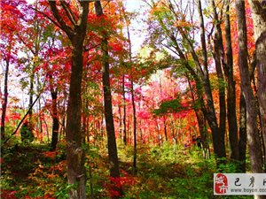 【巴彦网】二八歌户外营-10月16号吉林舒兰红叶谷休闲美拍