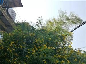 花果山一日游,在深秋