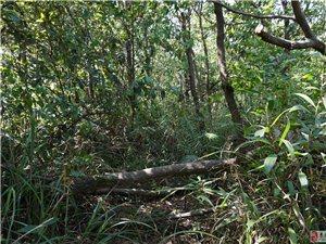 走进丛林,亲近大自然,洗洗肺