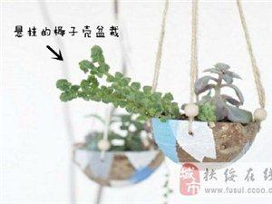 盆栽也可以很有创意