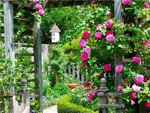 庭院的花朵,永远是那么唯美。
