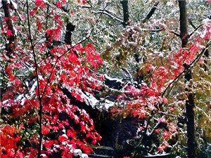 雪后的栖霞山
