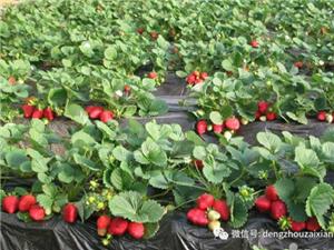 这个冬天,让我们和草莓来一次浪漫的约会!