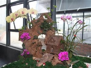 珠海台湾农民创业园花展