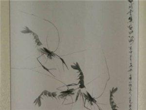 史庆尧   虾画组图
