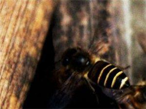 �A防蜜蜂白�撞〉慕��