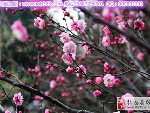 春暖花开好踏青