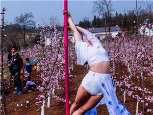 杏花丛中钢管舞
