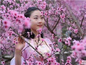 """牵手""""杏""""福金塔,探寻唐代文化,拍古装大片,享受健康生活"""