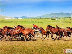结伴撒欢儿五彩斑斓的呼伦贝尔策马奔腾穿越草原