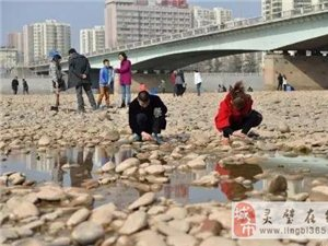 """黄河水位下降""""露底"""" 兰州市民河心捡石头"""
