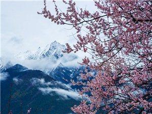 十里桃花――西藏林芝