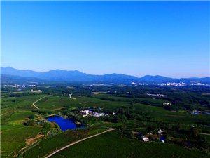 航拍万亩茶园丨这才是看白沙绿茶园的最佳视角!超震撼!!