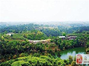 自贡这个仅有1.3万人口的小镇,如今却要打造国内首家4A级彩色生态公园