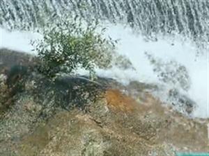 到南康隆木去看水