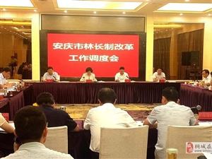 安庆市林长制改革工作调度会在桐召开 陈爱军杨林等出席