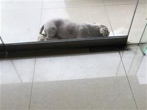 失狗招领,有只狗一只在家门口蹲着,看上去是有人不养了的宠物狗