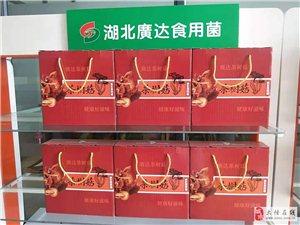 中华神菇 - 抗癌尖兵