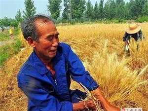 建议六合江淮分水岭地区实行冬季休耕