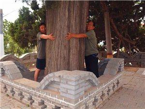 """亚博yaboPG电子一村:""""镇村之宝""""是4棵树!村支书:""""卖了就是历史罪人!"""""""