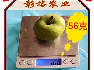 重�c巫山脆李推�]68元5斤包�]哦�不多�s快���哦
