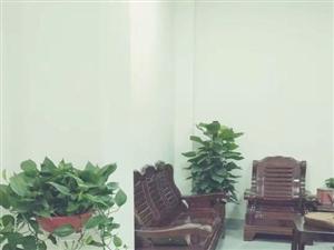 �k公室最佳伴�H-盆�G�}+棒�G�}――�A亮�@�盆景租�U��景拍�z