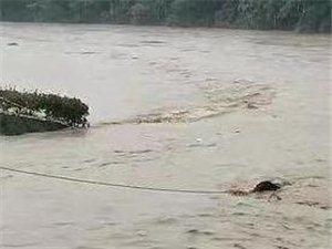 �h中����一�^水牛被困河中 �人合力救援