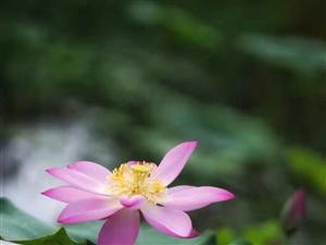 一念心清净,处处莲花开