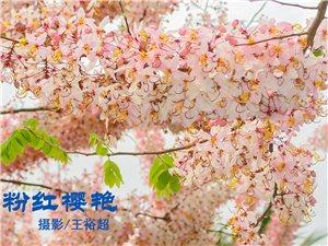 王裕超拍摄樱花组照
