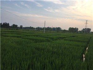 鱼米之乡的小潢河内鱼、虾明显增多,环保治理对生态的影响?#25925;?#25402;大的。