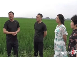 【巴彦网】巴彦县农技人员深入各乡镇对水稻稻瘟病进行调查