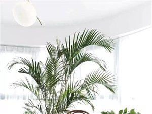 100平方米新中式风格装修效果图,超美!