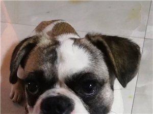 寻狗启事!永春的朋友有谁看到过这只狗狗吗?请转发扩散!