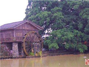 永恒的古榕树、水车还有那土楼