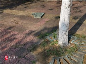 是谁下的黑手?亚博体育yabo88在线街头的公共设施被无情破坏,看着真让人寒心...
