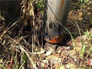 驻马店一男子玩命盗窃,10KV带电电缆被切断 !